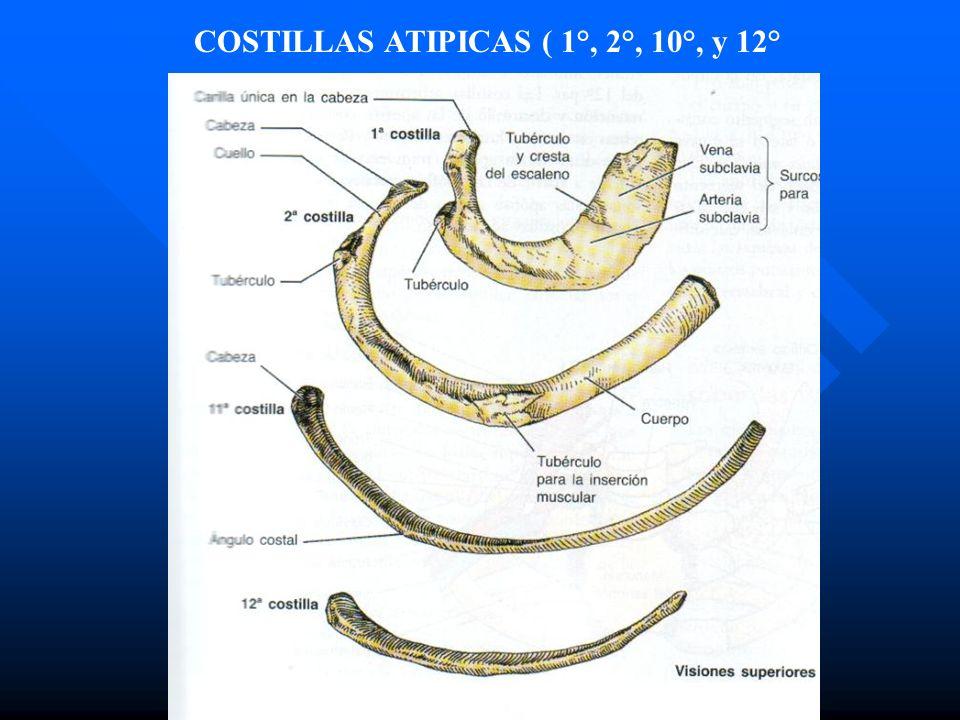 COSTILLAS ATIPICAS ( 1°, 2°, 10°, y 12°