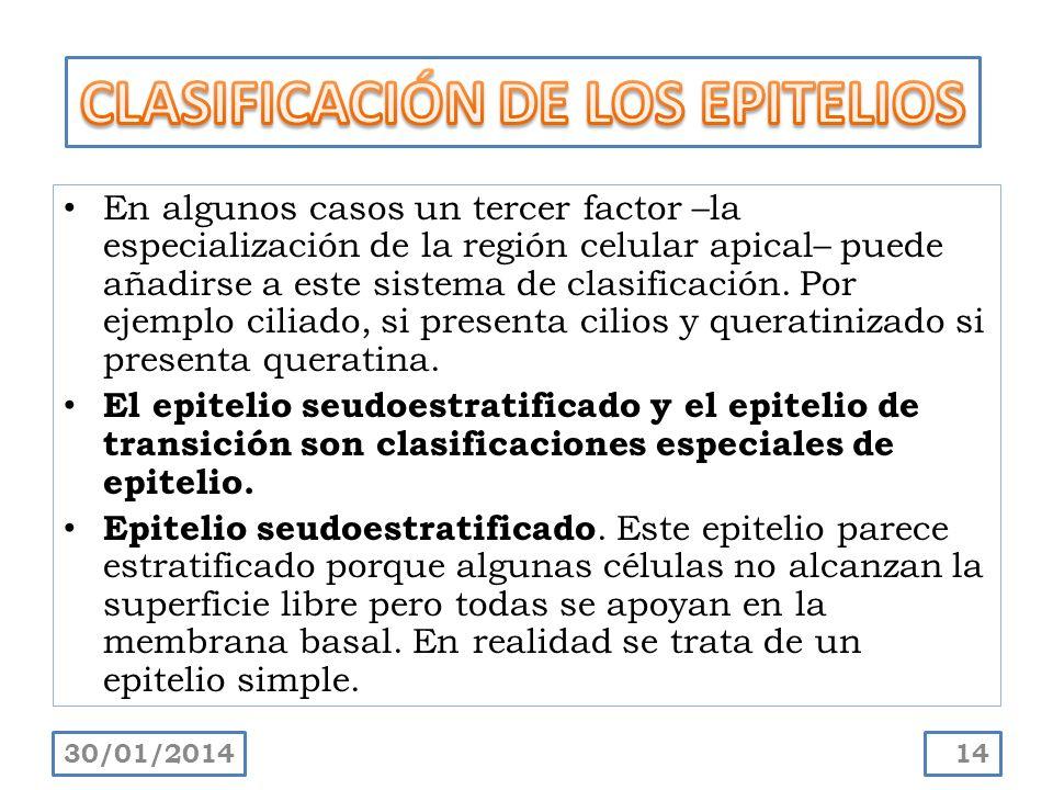 En algunos casos un tercer factor –la especialización de la región celular apical– puede añadirse a este sistema de clasificación. Por ejemplo ciliado
