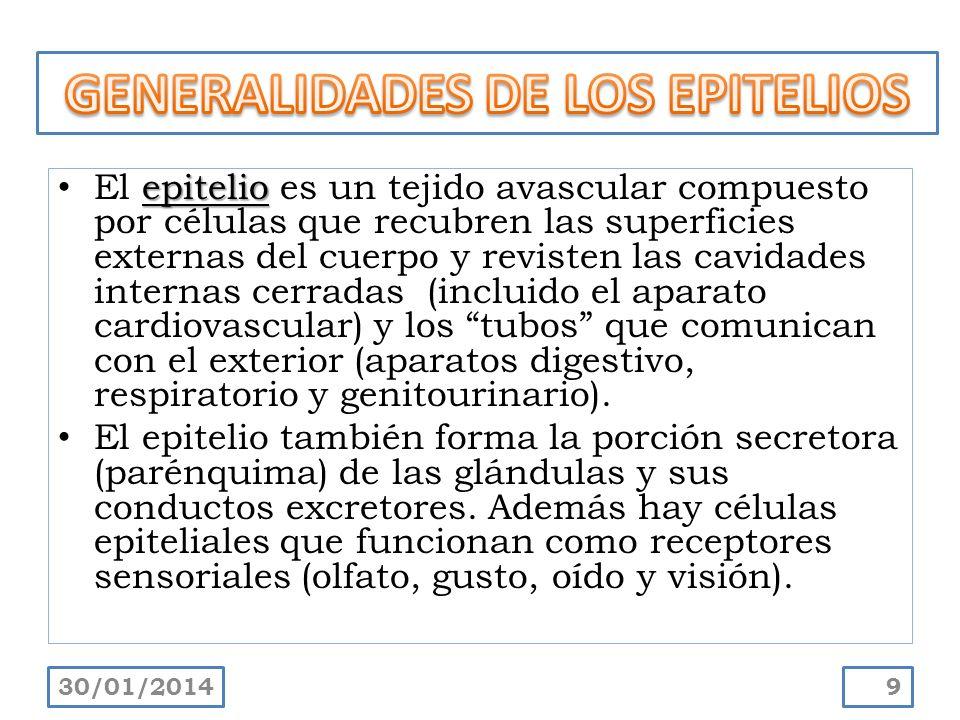 epitelio El epitelio es un tejido avascular compuesto por células que recubren las superficies externas del cuerpo y revisten las cavidades internas c