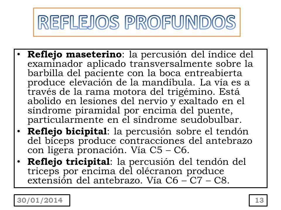 Reflejo maseterino : la percusión del índice del examinador aplicado transversalmente sobre la barbilla del paciente con la boca entreabierta produce