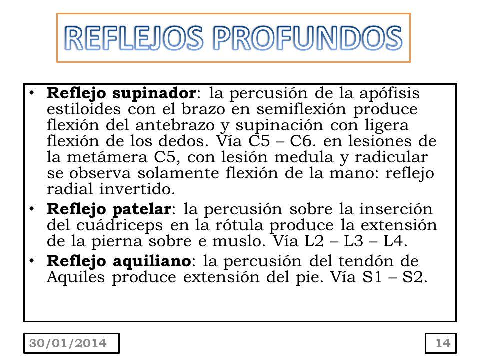 Reflejo supinador : la percusión de la apófisis estiloides con el brazo en semiflexión produce flexión del antebrazo y supinación con ligera flexión d