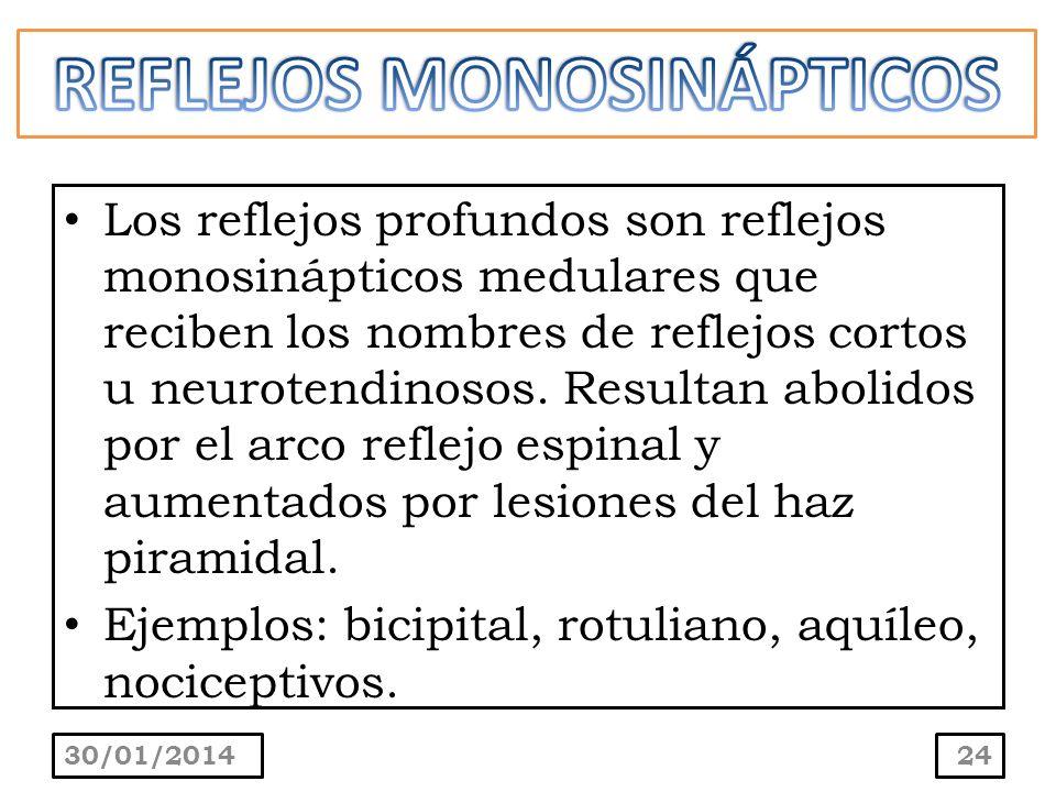 Los reflejos profundos son reflejos monosinápticos medulares que reciben los nombres de reflejos cortos u neurotendinosos. Resultan abolidos por el ar