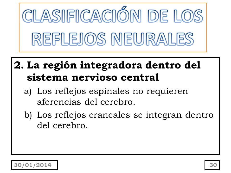 2.La región integradora dentro del sistema nervioso central a)Los reflejos espinales no requieren aferencias del cerebro. b)Los reflejos craneales se