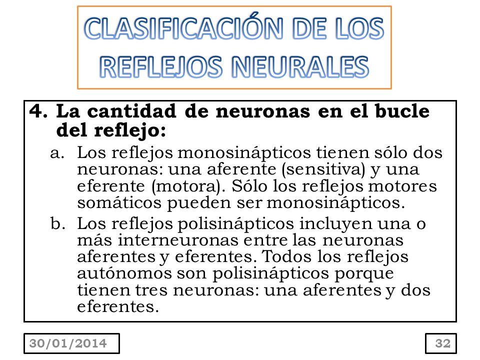 4.La cantidad de neuronas en el bucle del reflejo: a.Los reflejos monosinápticos tienen sólo dos neuronas: una aferente (sensitiva) y una eferente (mo