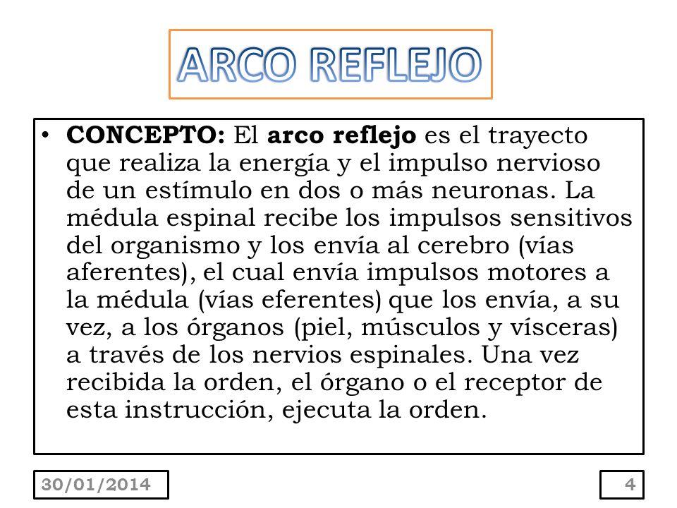 5 El arco reflejo está compuesto por varias estructuras, son: El receptor La neurona sensitiva El centro elaborador La neurona motora El efector