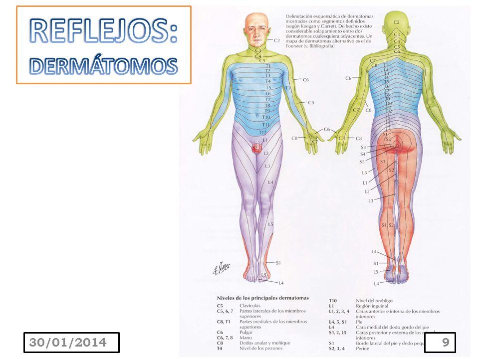 La contracción muscular resulta de la estimulación de la piel o de las mucosas.