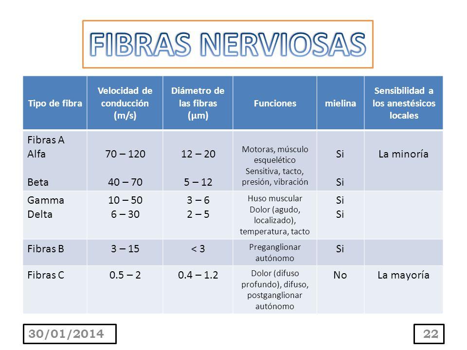 30/01/201422 Tipo de fibra Velocidad de conducción (m/s) Diámetro de las fibras (µm) Funcionesmielina Sensibilidad a los anestésicos locales Fibras A