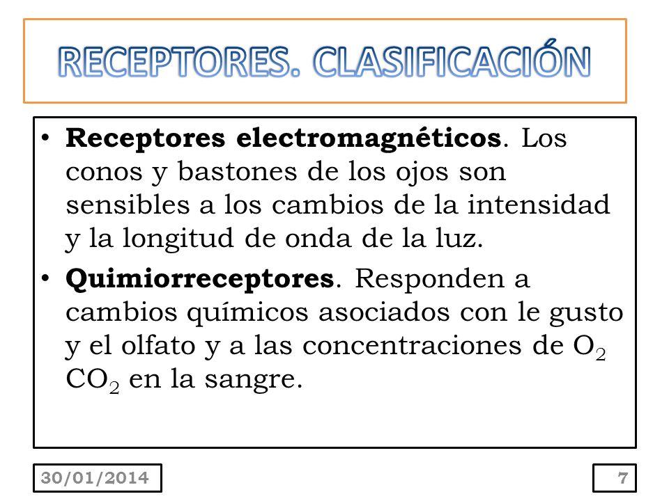 Receptores electromagnéticos. Los conos y bastones de los ojos son sensibles a los cambios de la intensidad y la longitud de onda de la luz. Quimiorre