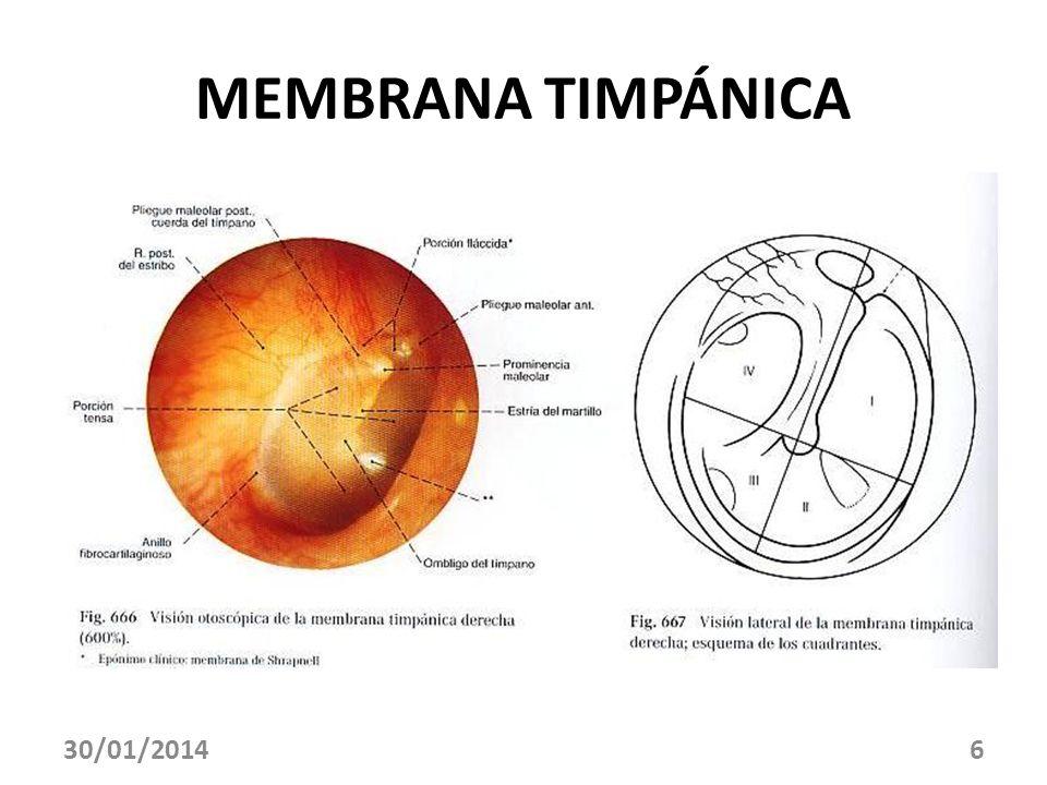 MEMBRANA TIMPÁNICA 30/01/20146