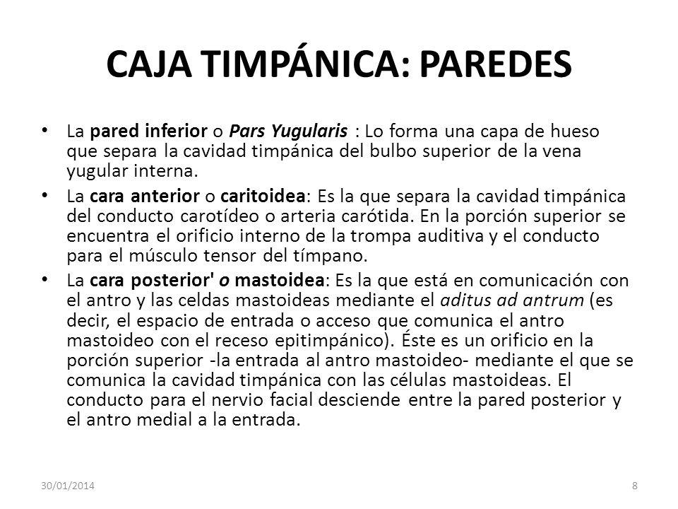 CAJA TIMPÁNICA: PAREDES La pared inferior o Pars Yugularis : Lo forma una capa de hueso que separa la cavidad timpánica del bulbo superior de la vena