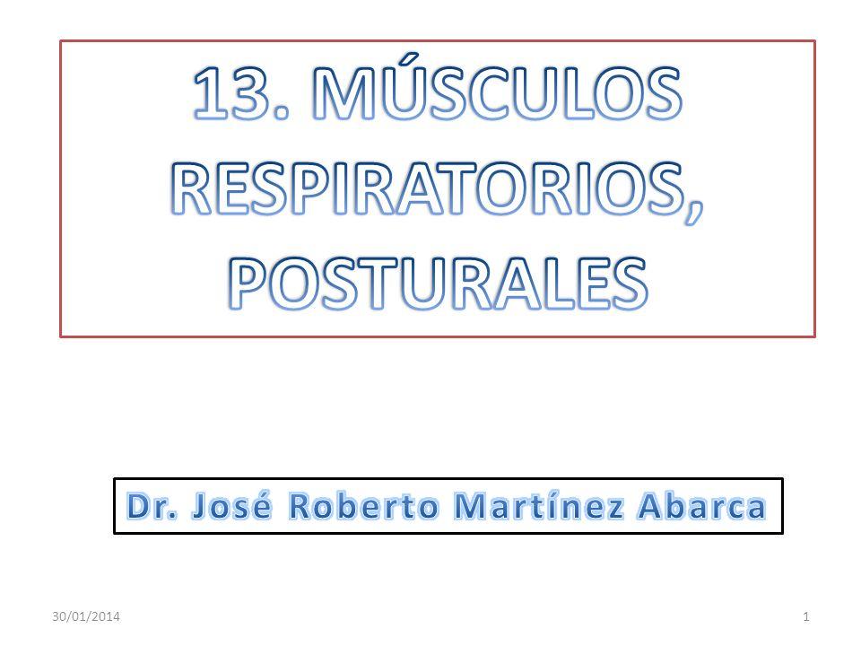 Que el estudiante: Diferencie entre los músculos de la postura y de la locomoción.