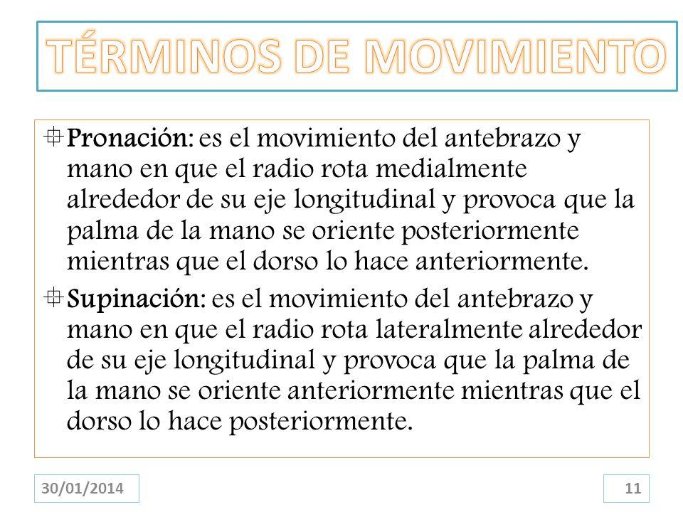 Pronación: es el movimiento del antebrazo y mano en que el radio rota medialmente alrededor de su eje longitudinal y provoca que la palma de la mano s