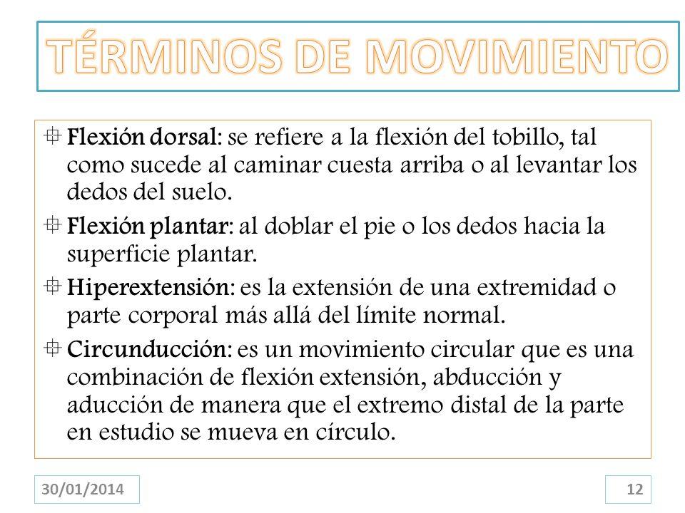 Flexión dorsal: se refiere a la flexión del tobillo, tal como sucede al caminar cuesta arriba o al levantar los dedos del suelo. Flexión plantar: al d