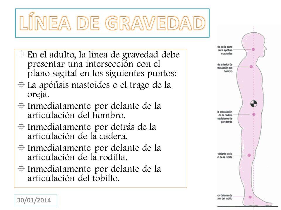 En el adulto, la línea de gravedad debe presentar una intersección con el plano sagital en los siguientes puntos: La apófisis mastoides o el trago de