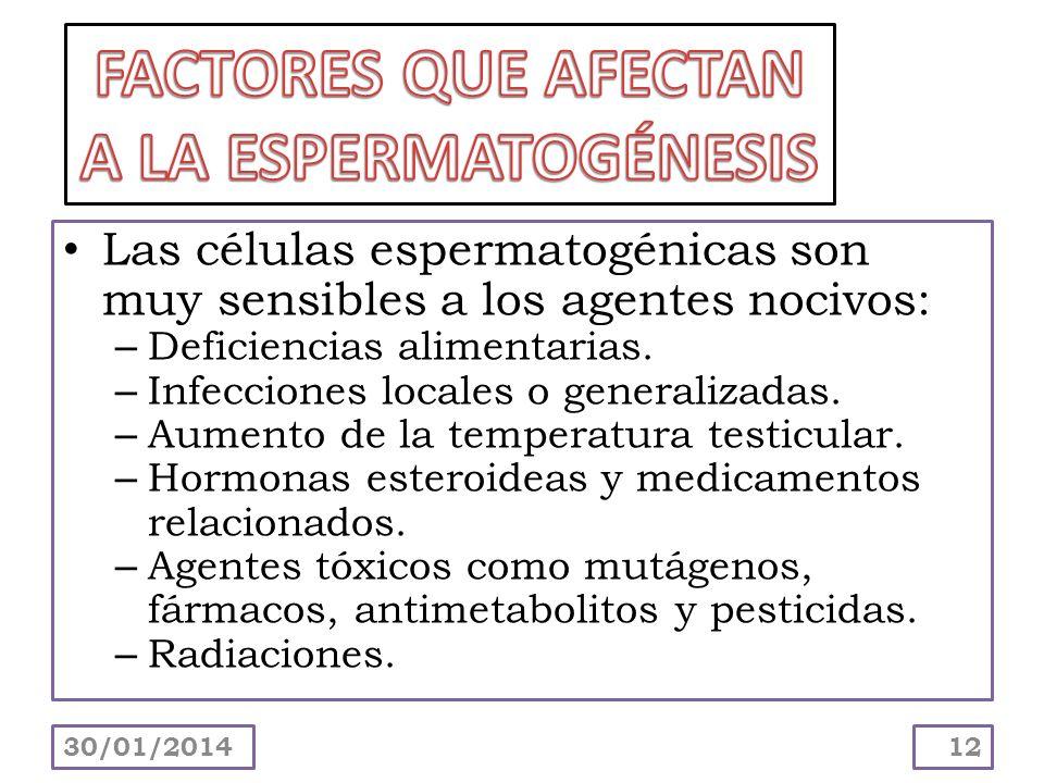 Las células espermatogénicas son muy sensibles a los agentes nocivos: – Deficiencias alimentarias. – Infecciones locales o generalizadas. – Aumento de