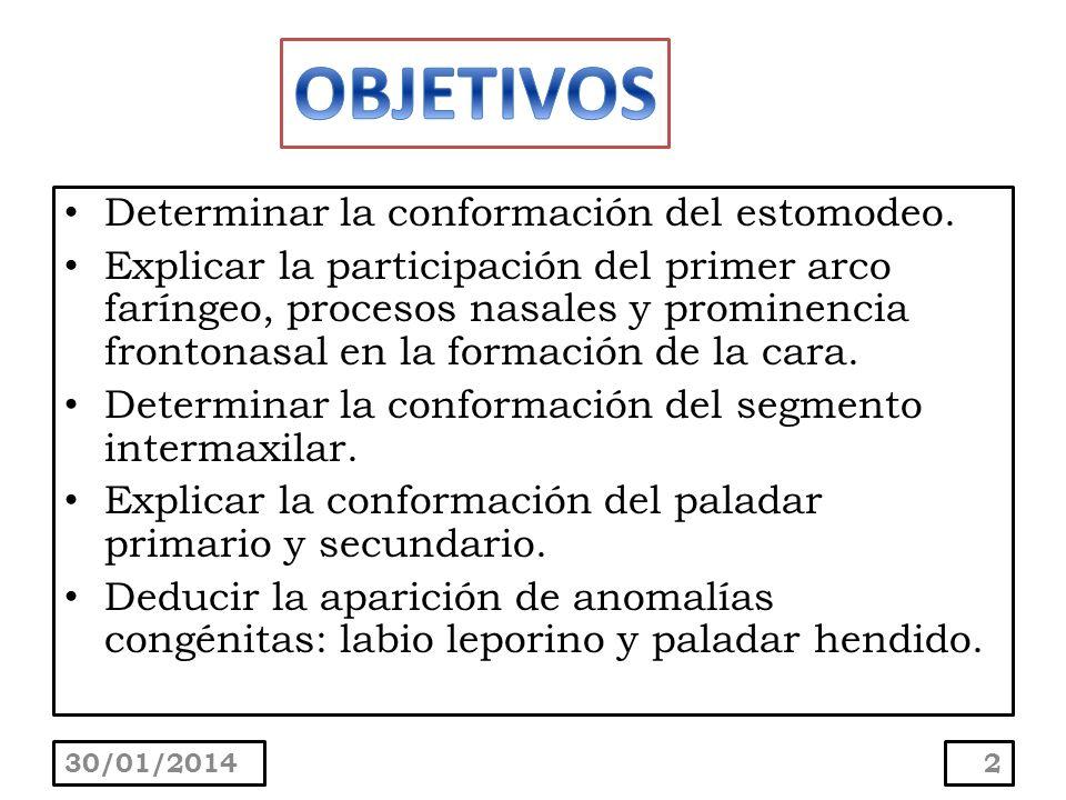 Determinar la conformación del estomodeo. Explicar la participación del primer arco faríngeo, procesos nasales y prominencia frontonasal en la formaci