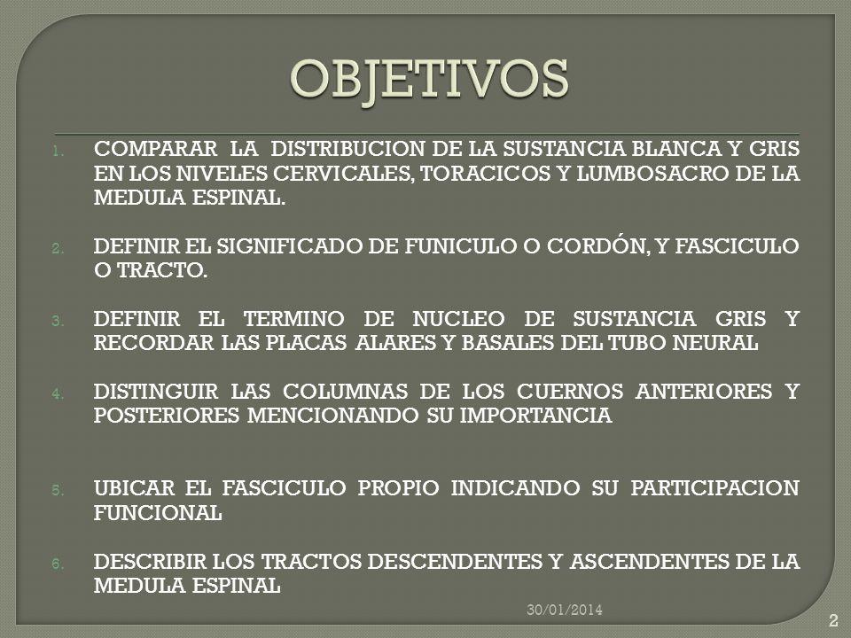 1. COMPARAR LA DISTRIBUCION DE LA SUSTANCIA BLANCA Y GRIS EN LOS NIVELES CERVICALES, TORACICOS Y LUMBOSACRO DE LA MEDULA ESPINAL. 2. DEFINIR EL SIGNIF