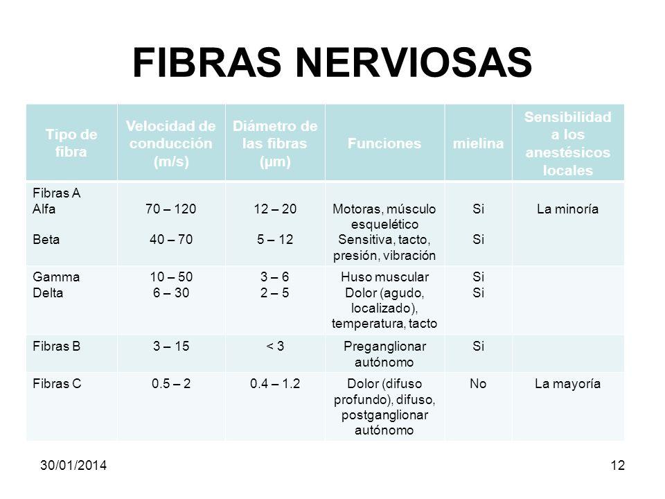 FIBRAS NERVIOSAS Tipo de fibra Velocidad de conducción (m/s) Diámetro de las fibras (µm) Funcionesmielina Sensibilidad a los anestésicos locales Fibra