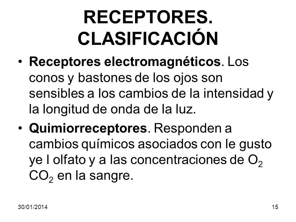 RECEPTORES. CLASIFICACIÓN Receptores electromagnéticos. Los conos y bastones de los ojos son sensibles a los cambios de la intensidad y la longitud de