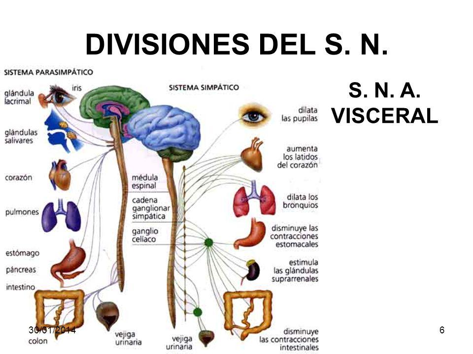 DIVISIONES DEL S. N. S. N. A. VISCERAL 30/01/20146