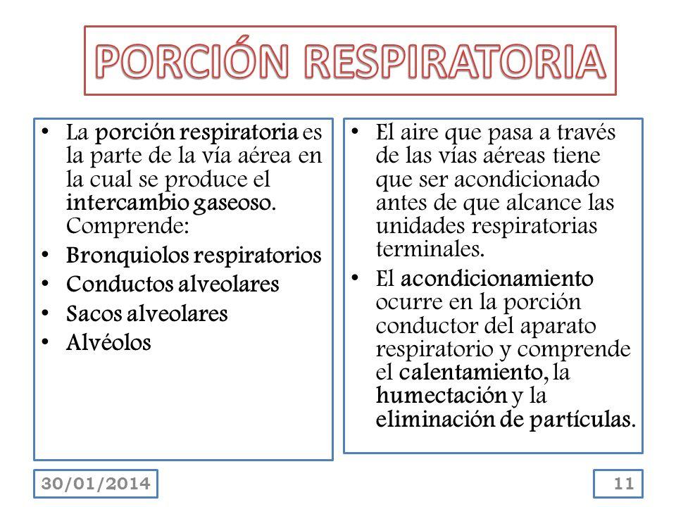 La porción respiratoria es la parte de la vía aérea en la cual se produce el intercambio gaseoso. Comprende: Bronquiolos respiratorios Conductos alveo