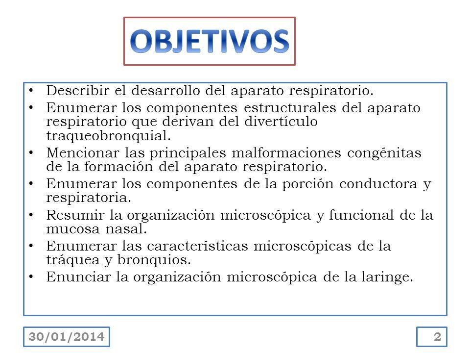 Describir el desarrollo del aparato respiratorio. Enumerar los componentes estructurales del aparato respiratorio que derivan del divertículo traqueob