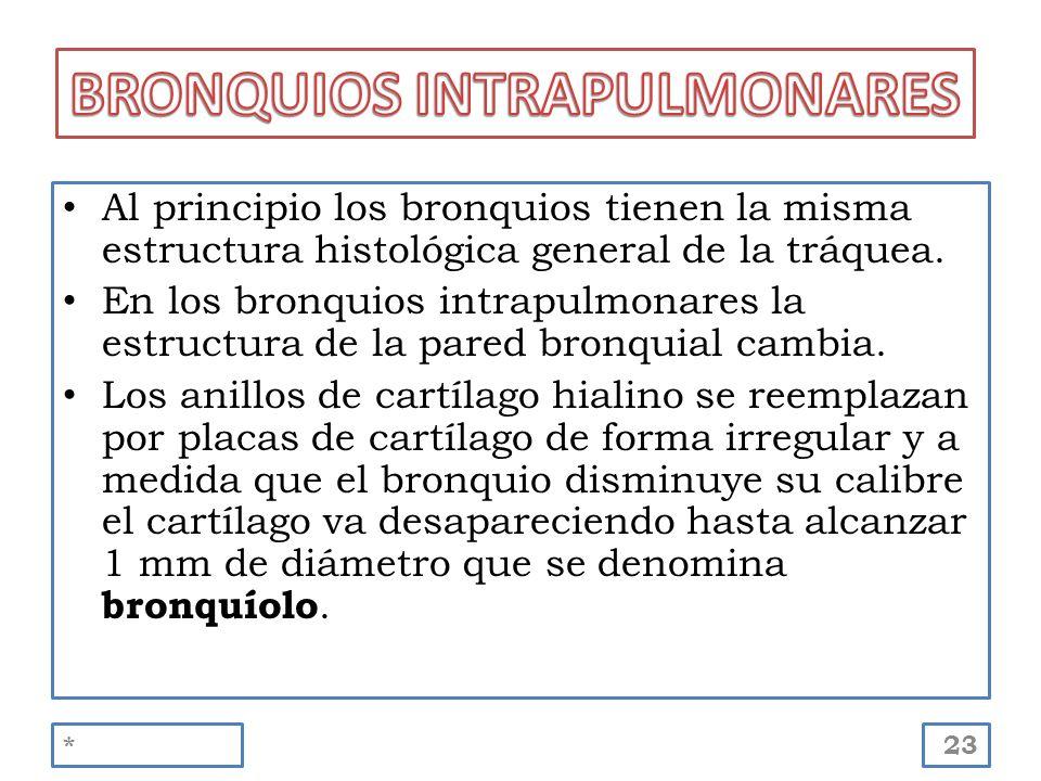Al principio los bronquios tienen la misma estructura histológica general de la tráquea. En los bronquios intrapulmonares la estructura de la pared br