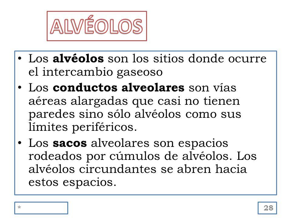 Los alvéolos son los sitios donde ocurre el intercambio gaseoso Los conductos alveolares son vías aéreas alargadas que casi no tienen paredes sino sól
