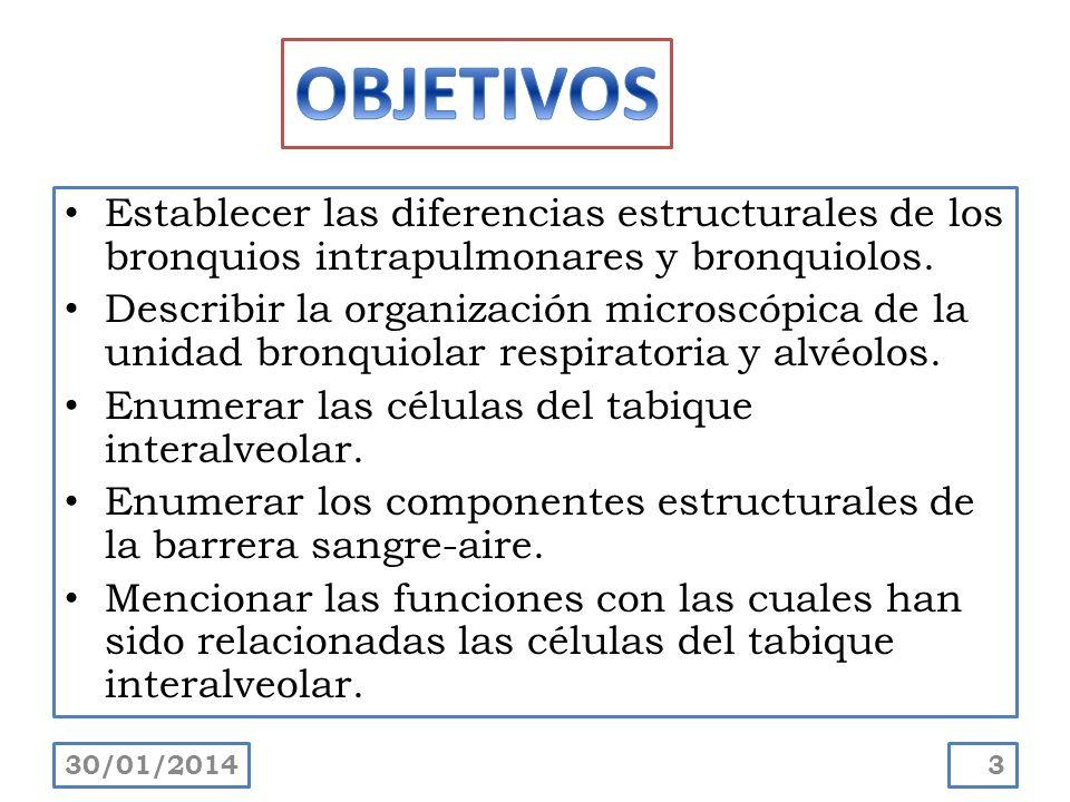 Establecer las diferencias estructurales de los bronquios intrapulmonares y bronquiolos. Describir la organización microscópica de la unidad bronquiol