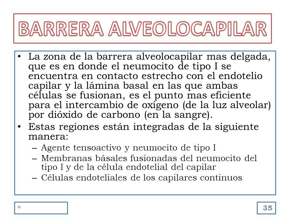 La zona de la barrera alveolocapilar mas delgada, que es en donde el neumocito de tipo I se encuentra en contacto estrecho con el endotelio capilar y
