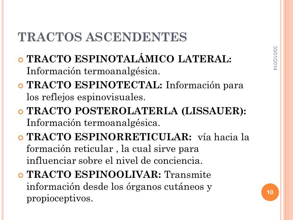 TRACTOS ASCENDENTES TRACTO ESPINOTALÁMICO LATERAL: Información termoanalgésica. TRACTO ESPINOTECTAL: Información para los reflejos espinovisuales. TRA