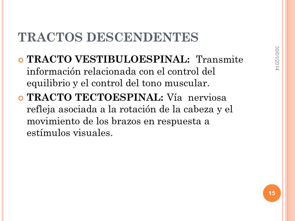 TRACTOS DESCENDENTES TRACTO VESTIBULOESPINAL: Transmite información relacionada con el control del equilibrio y el control del tono muscular. TRACTO T