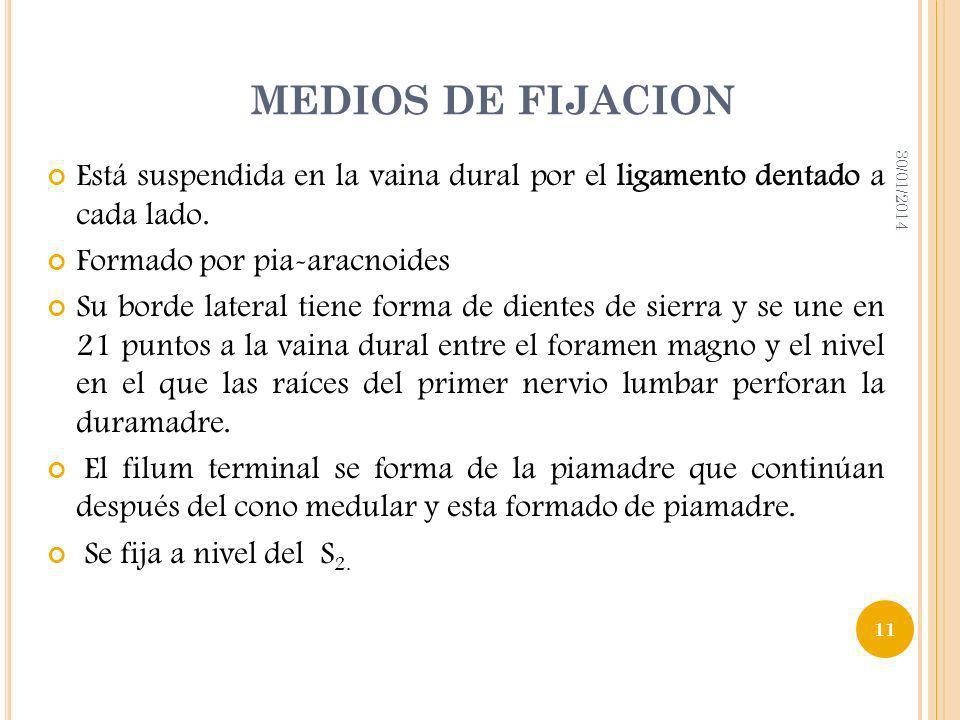 MEDIOS DE FIJACION Está suspendida en la vaina dural por el ligamento dentado a cada lado. Formado por pia-aracnoides Su borde lateral tiene forma de
