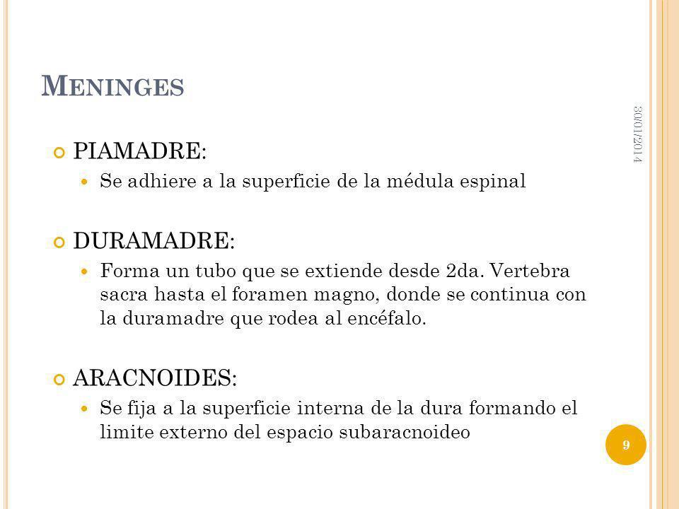 MÉDULA Y SUS PROTECCIONES. FIJACIONES 30/01/2014 10