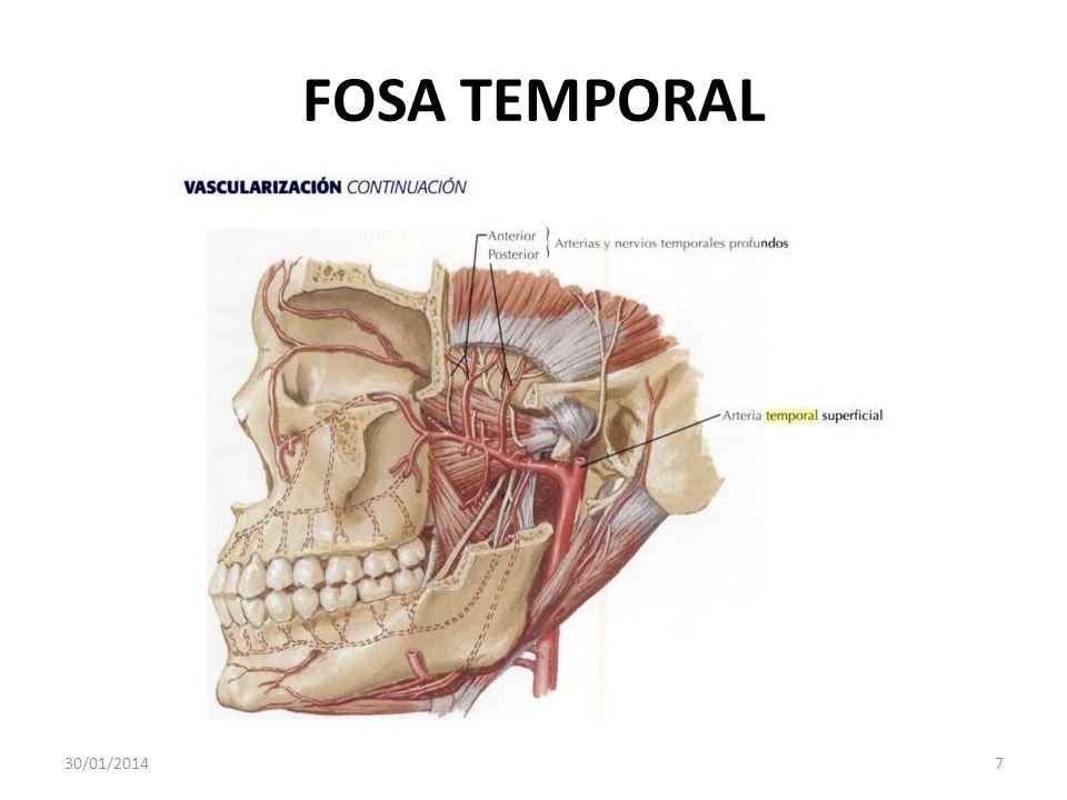 FOSA TEMPORAL 30/01/20147
