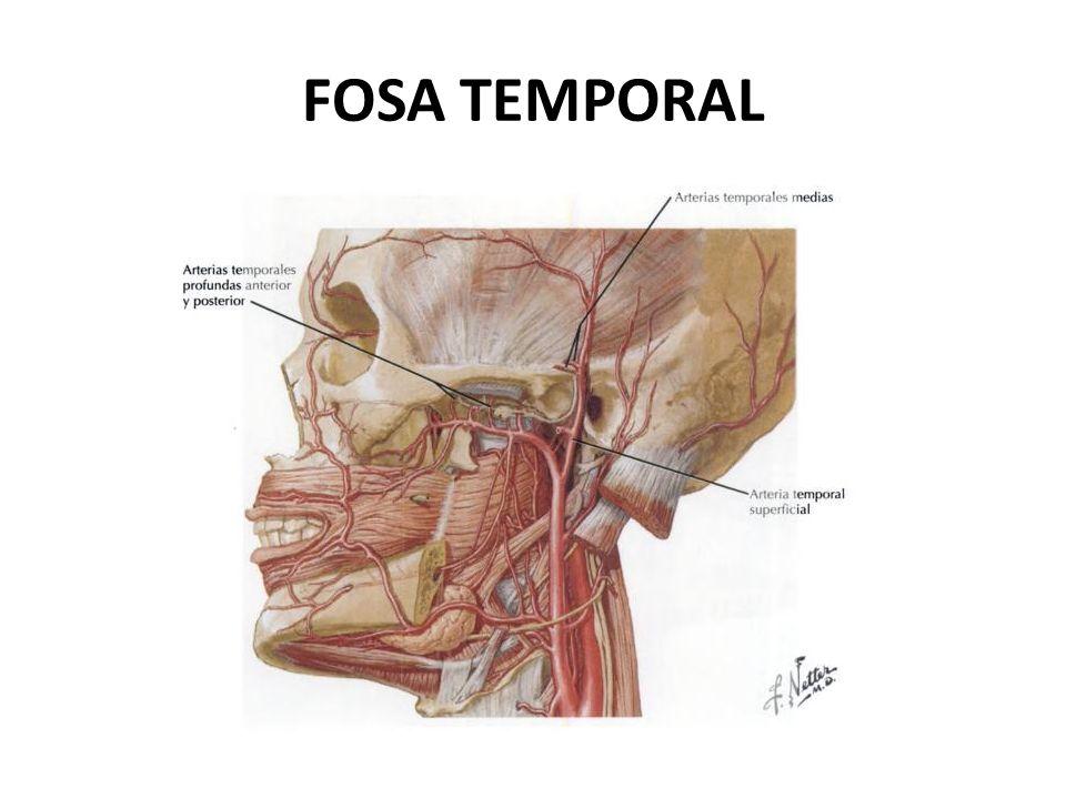 FOSA TEMPORAL