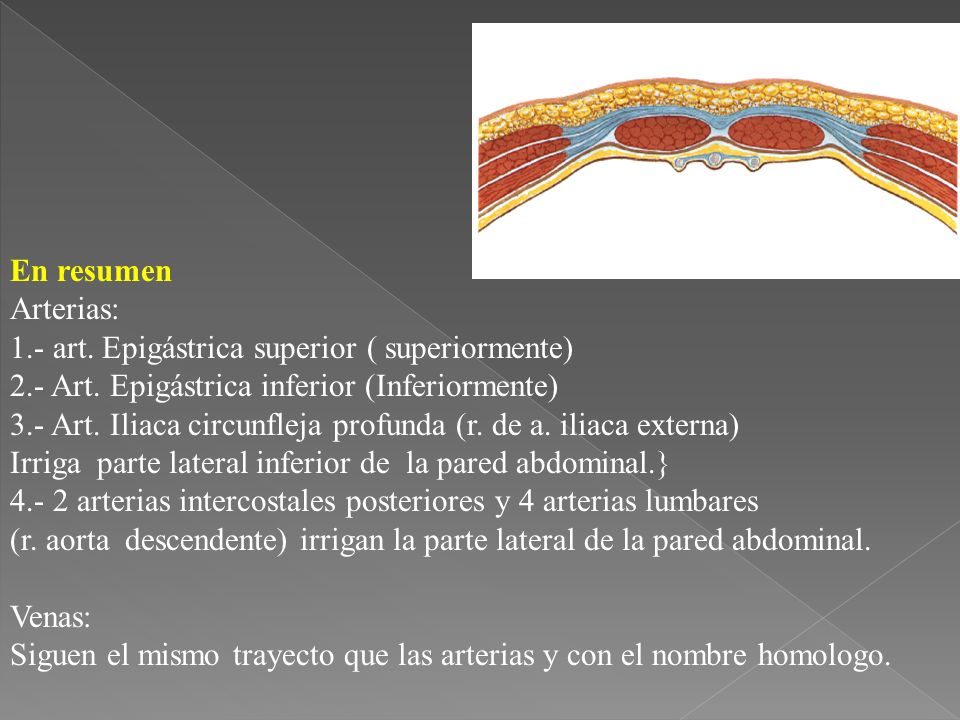 En resumen Arterias: 1.- art.Epigástrica superior ( superiormente) 2.- Art.