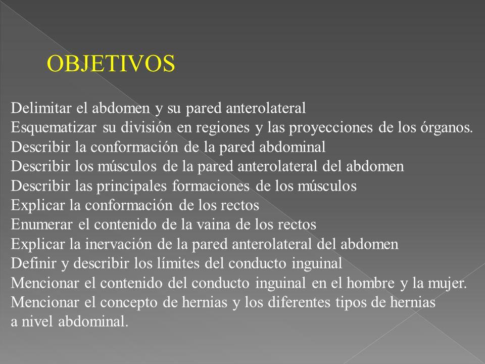 OBJETIVOS Delimitar el abdomen y su pared anterolateral Esquematizar su división en regiones y las proyecciones de los órganos.