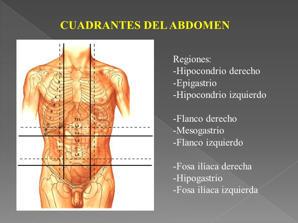 CUADRANTES DEL ABDOMEN Regiones: -Hipocondrio derecho -Epigastrio -Hipocondrio izquierdo -Flanco derecho -Mesogastrio -Flanco izquierdo -Fosa ilíaca derecha -Hipogastrio -Fosa ilíaca izquierda