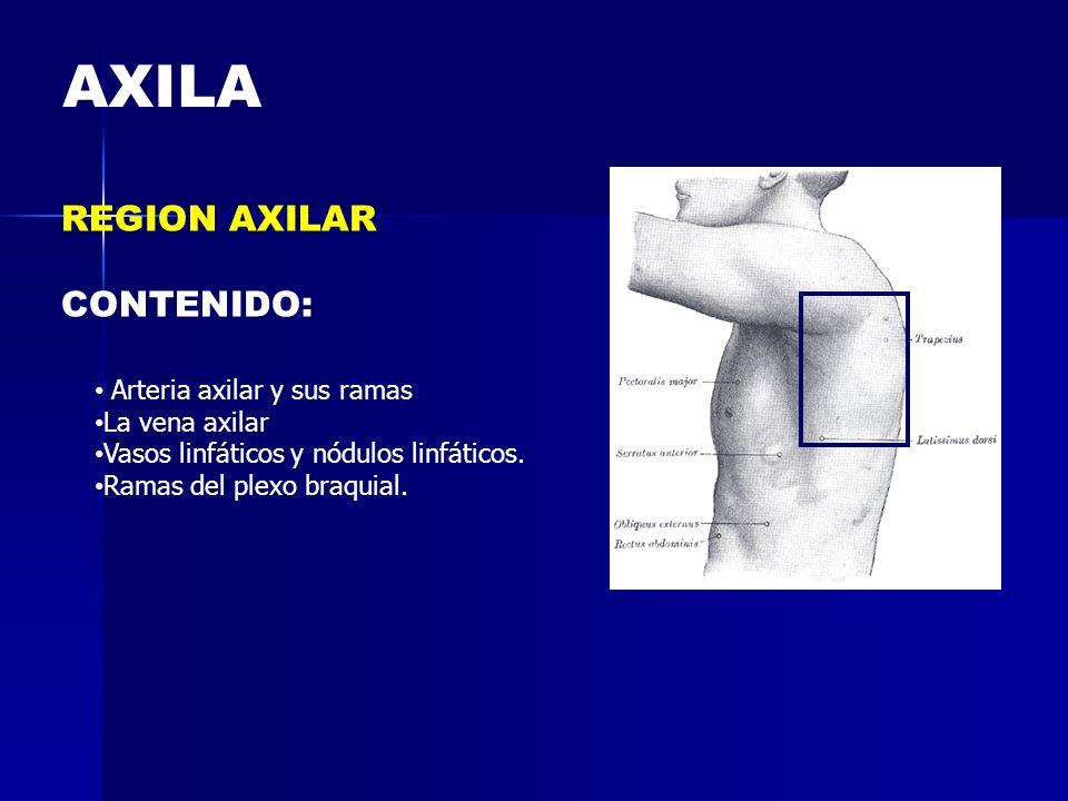 AXILA REGION AXILAR CONTENIDO: Arteria axilar y sus ramas La vena axilar Vasos linfáticos y nódulos linfáticos. Ramas del plexo braquial.