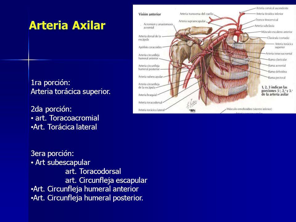 1ra porción: Arteria torácica superior. 2da porción: art. Toracoacromial Art. Torácica lateral 3era porción: Art subescapular art. Toracodorsal art. C