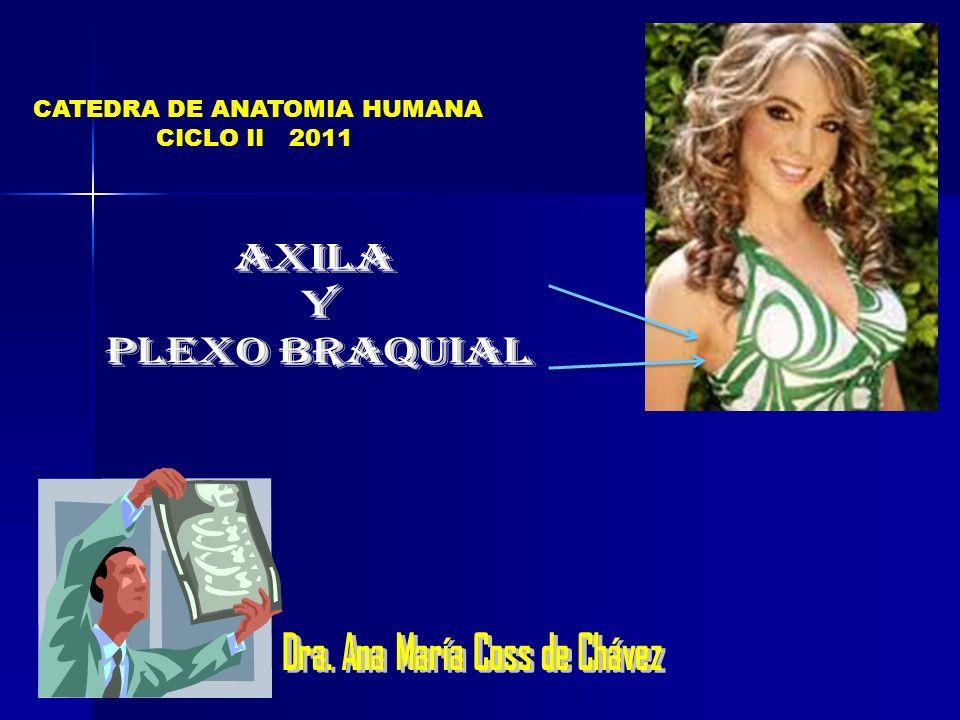CATEDRA DE ANATOMIA HUMANA CICLO II 2011