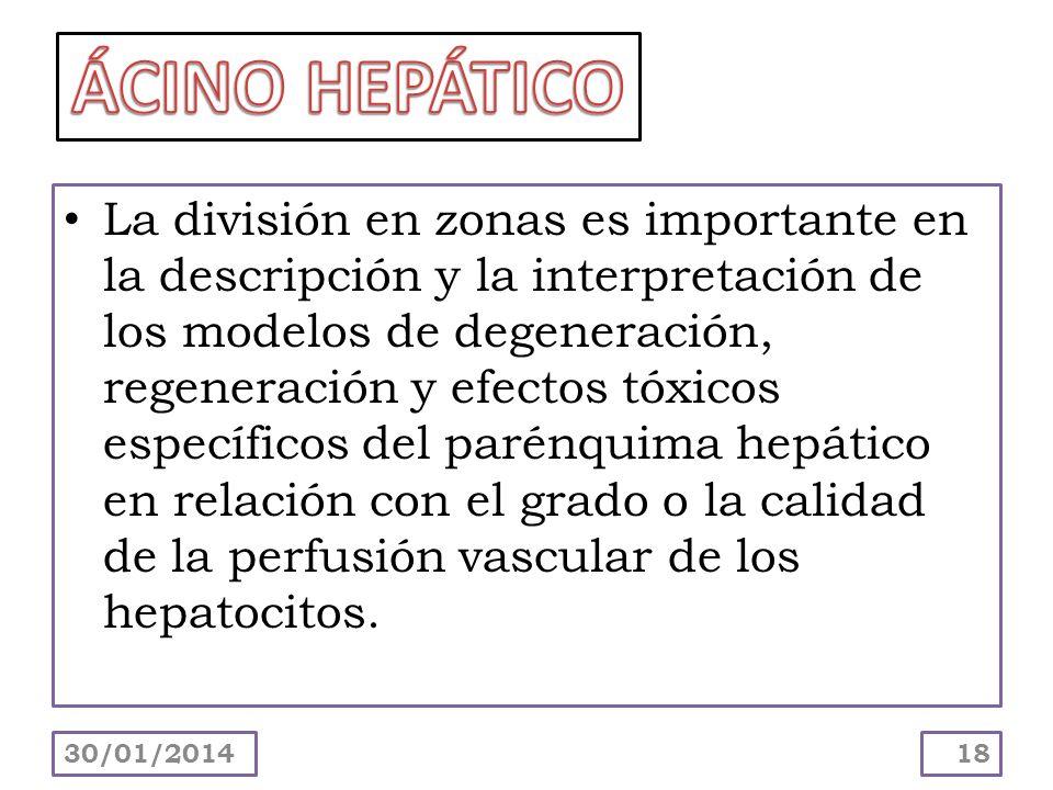 La división en zonas es importante en la descripción y la interpretación de los modelos de degeneración, regeneración y efectos tóxicos específicos de