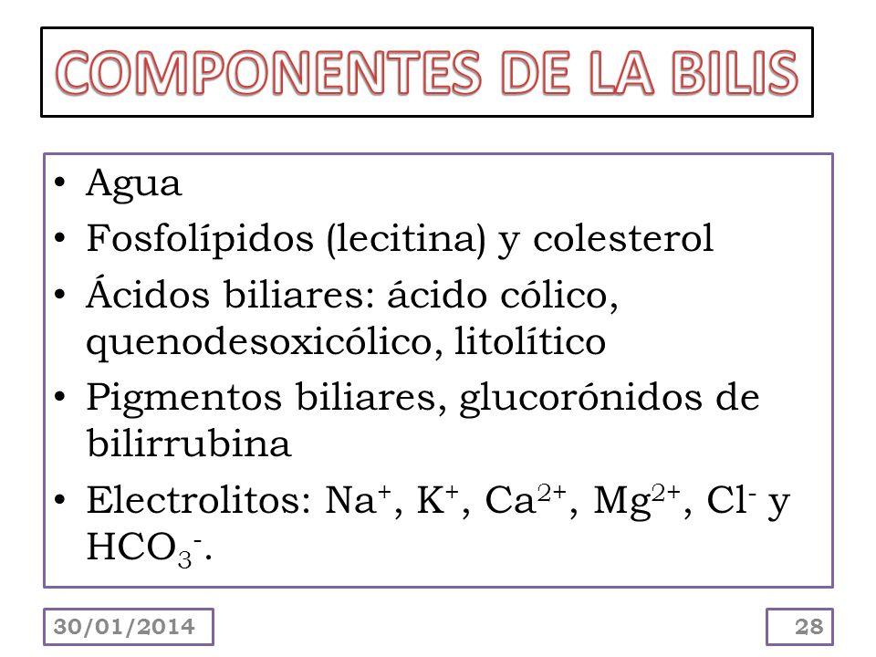 Agua Fosfolípidos (lecitina) y colesterol Ácidos biliares: ácido cólico, quenodesoxicólico, litolítico Pigmentos biliares, glucorónidos de bilirrubina