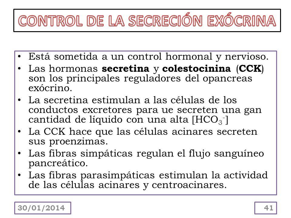 Está sometida a un control hormonal y nervioso. Las hormonas secretina y colestocinina ( CCK ) son los principales reguladores del opancreas exócrino.