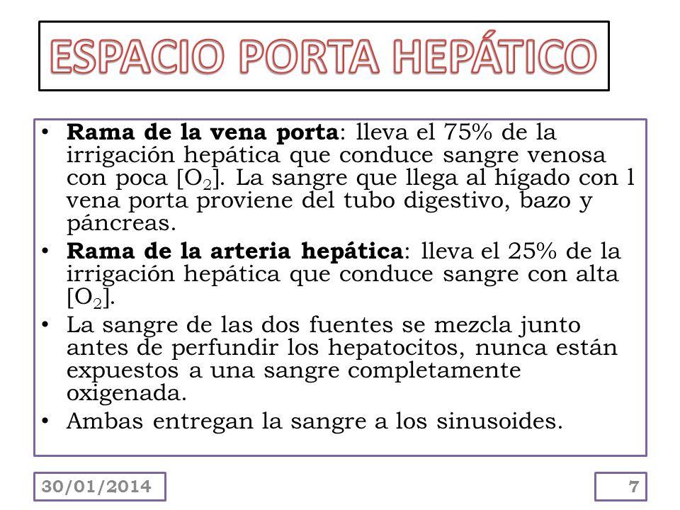 Rama de la vena porta : lleva el 75% de la irrigación hepática que conduce sangre venosa con poca O 2. La sangre que llega al hígado con l vena porta