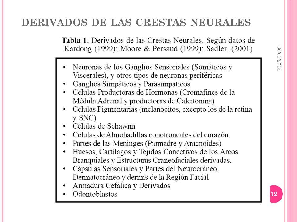 DERIVADOS DE LAS CRESTAS NEURALES 30/01/2014 12
