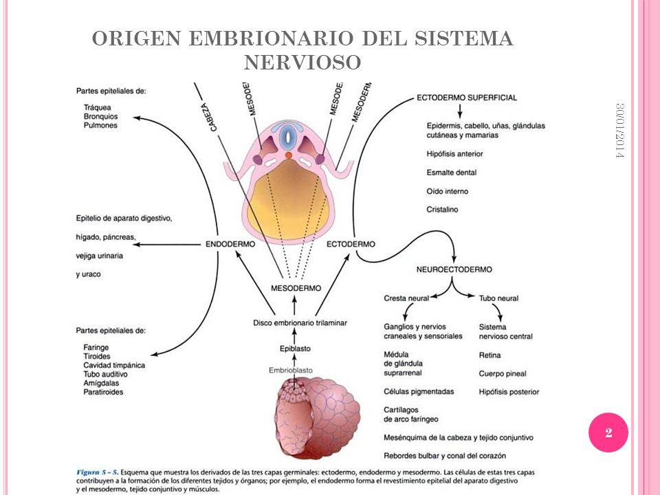 ORIGEN EMBRIONARIO DEL SISTEMA NERVIOSO 30/01/2014 2