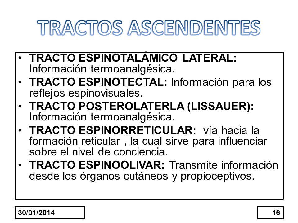 TRACTO ESPINOTALÁMICO LATERAL: Información termoanalgésica. TRACTO ESPINOTECTAL: Información para los reflejos espinovisuales. TRACTO POSTEROLATERLA (