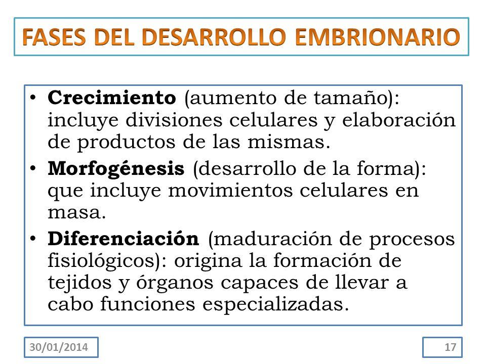 Crecimiento (aumento de tamaño): incluye divisiones celulares y elaboración de productos de las mismas. Morfogénesis (desarrollo de la forma): que inc